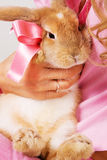 A little rabbit with a pink bow Royalty Free Stock Photos