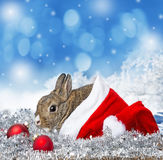 Little rabbit in a red santa cap Stock Image