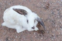Little rabbit select focus blurry background,Beautiful White Rabbit,Rabbit sick royalty free stock photography