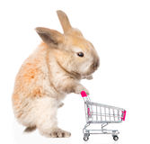 Little rabbit with shopping trolley. isolated on white backgroun Royalty Free Stock Photo
