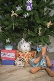 Little rabbit sits under the Christmas tree stock images