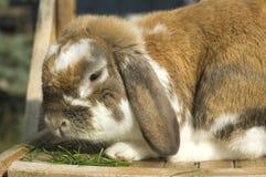 Little rabbit sitting Stock Photo