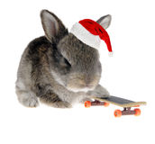 Little rabbit on a skateboard in Santa Claus hat Royalty Free Stock Images