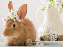 Little rabbit with spring flowers. And Easter eggs stock image