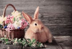 Little rabbit with spring flowers stock images