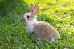Little rabbit in spring Royalty Free Stock Photos