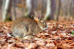 Cute rabbit in the forest Royalty Free Stock Image