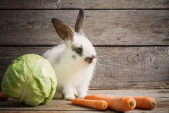 Little rabbit with vegetables Royalty Free Stock Image