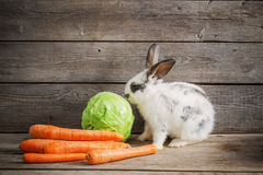 Little rabbit with vegetables royalty free stock photos