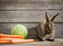 Little rabbit with vegetables stock photo