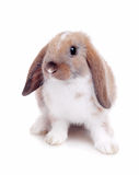 Little rabbit on a white background Stock Photos