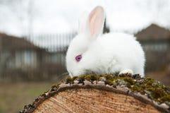 Little rabbit on the yard Stock Photo