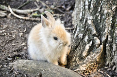 Little Rabbit. A young rabbit near a tree Stock Image