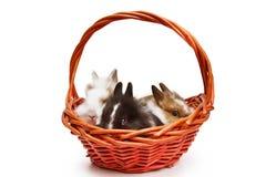 Little rabbits Stock Photos