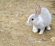 Little rabbits Stock Photography