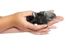 Little rabbits in the hands Stock Photography