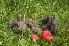 Little rabbits on a pasture and red eggs. Pet Royalty Free Stock Image
