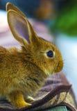 Little rabbits. rabbit in farm cage or hutch. Breeding rabbits c Royalty Free Stock Photos