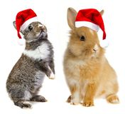 Little rabbits with santa caps. Little baby rabbits with a red santa caps Stock Photo