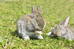Little rabbits sitting outdoors Royalty Free Stock Photos