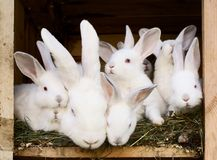 Little rabbits with their mum Stock Photography