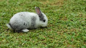 Little rabbits are tricky in the garden.  Royalty Free Stock Images