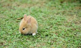 Little rabbits are tricky in the garden.  Royalty Free Stock Photo