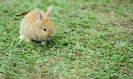Little rabbits are tricky in the garden.  Stock Photo