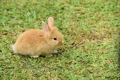 Little rabbits are tricky in the garden.  Stock Photos
