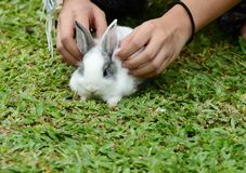 Little rabbits are tricky in the garden.  Stock Image