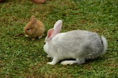 Little rabbits are tricky in the garden.  Stock Images