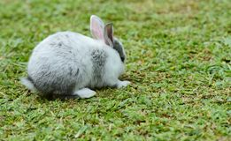 Little rabbits are tricky in the garden.  Royalty Free Stock Photos