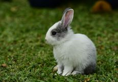 Little rabbits are tricky in the garden.  Royalty Free Stock Image