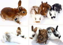 Little rabbits on white Royalty Free Stock Photo
