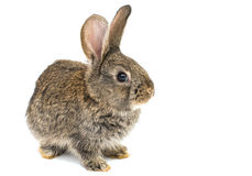 Little rabbits. On white background royalty free stock images