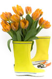 Little rain boots and fresh tulips Stock Images