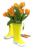 Little rain boots and fresh tulips royalty free stock photo