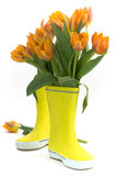 Little rain boots and fresh tulips stock photography