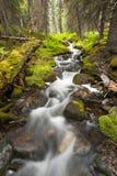 Little rapid in creek Stock Photos
