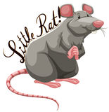 Little rat with text Stock Image