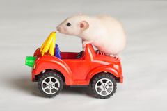 Little rat on a toy car Royalty Free Stock Image