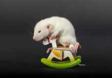 Little rat on toy horse Royalty Free Stock Image