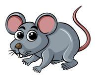 Little rat on white background. Illustration Royalty Free Stock Image