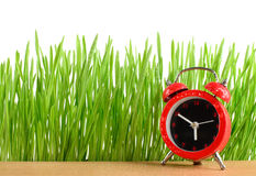 Little red alarm clock on desk and wet green grass isolated Stock Image