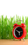 Little red alarm clock and wet green grass isolated on white Stock Photography