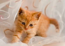Cat closeup on white background stock photography
