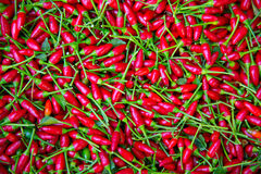 Little red chili peppers texture background Royalty Free Stock Photo