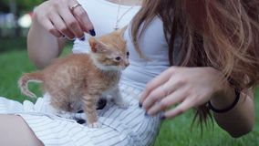 Little red cute kitten playing in green grass with brunette girl in a park stock footage