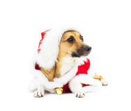 Little red doggy in Santa costume Stock Photo