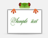 Little red-eyed tree frog is holding horizontal frame for congratulations Royalty Free Stock Images